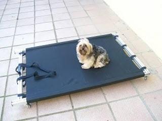 macas para permanência de cães com dificuldade de locomoção