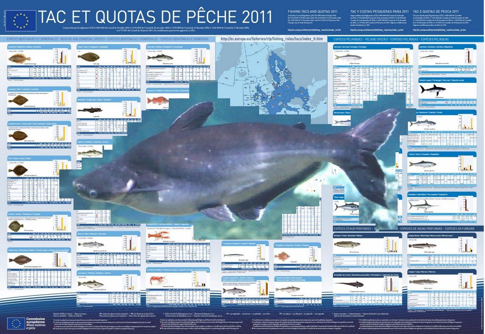 Panga la guerre du poisson blanc sur le march europ en for Achat poisson rouge paris 15