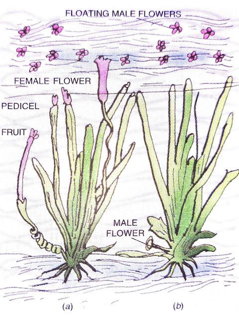advantages of pollination