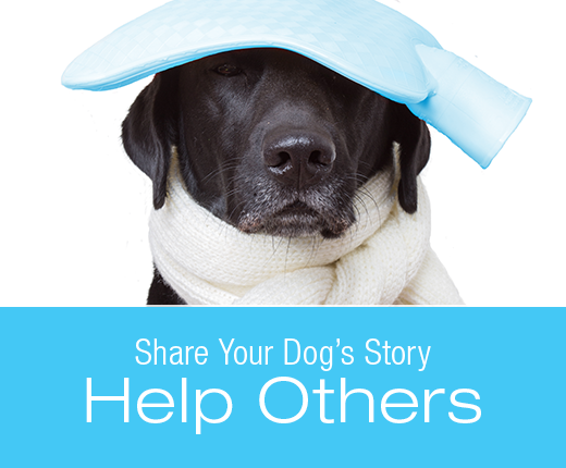 Share Your Story for a Chance to Win a Free Copy of Symptoms to Watch for in Your Dog