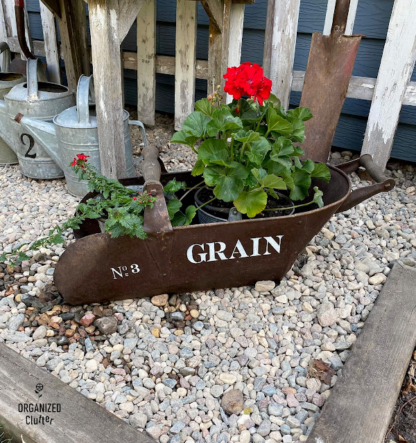 Photo of a grain scoop with verbena and geraniums.