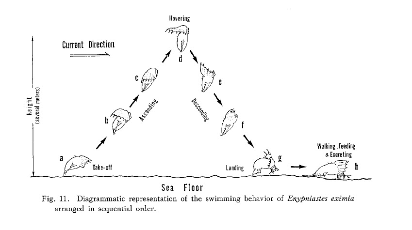 figure 11 from ohta1985 in the journal of the oceanographical society of  japan