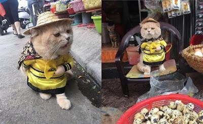 Viral! Kucing Lucu Ini Jadi Penjaga Lapak Ikan Sekaligus Mandor di Pasar