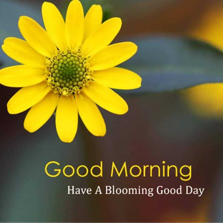 good morning have a blooming day