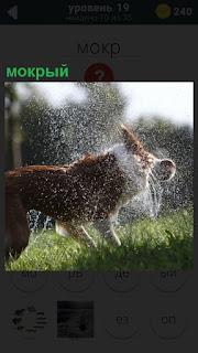 На поляне собака мокрая, пытается стряхнуть воду со своей шерсти