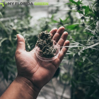 Medical MarijuanaCard Sarasota