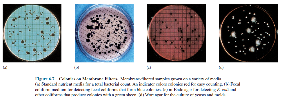 Colonies on Membrane Filters