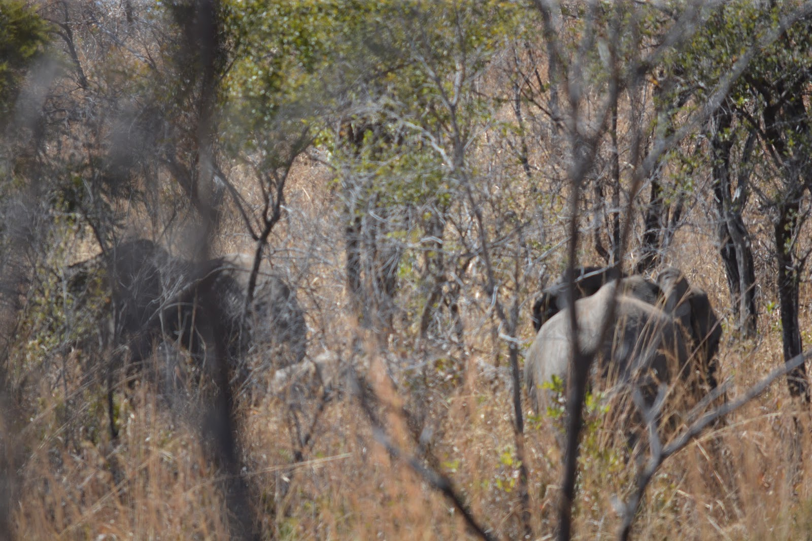 hunting elephants essay a photo essay hidden elephants the smoke of africa