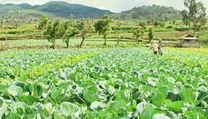 Holtikultura Membuat Petani Hidup Sejahtera
