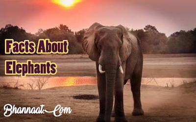 Facts About Elephants In Hindi हाथियों के बारे में कुछ रोचक तथ्य