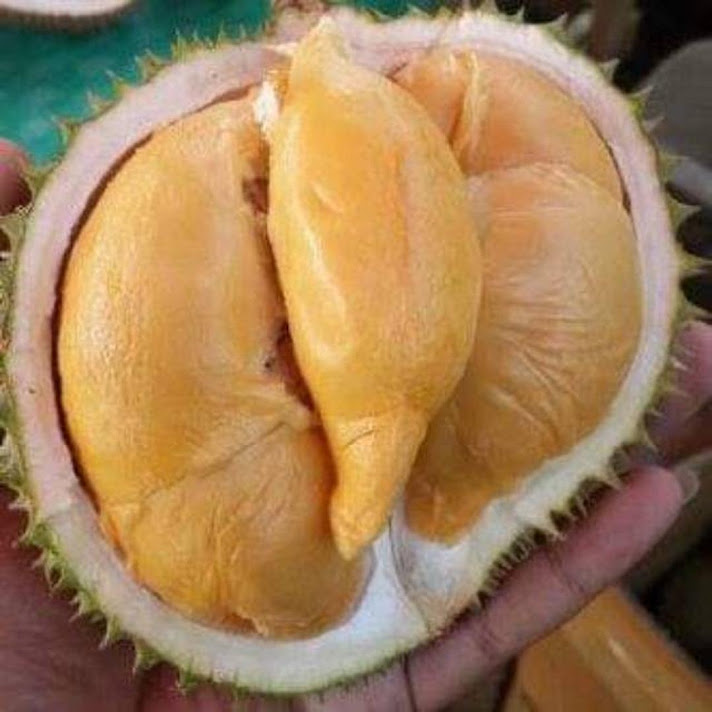 BIBIT DURIAN SUPER TEMBAGA BANGKA OKULASI CEPAT BUAH Sulawesi Tengah