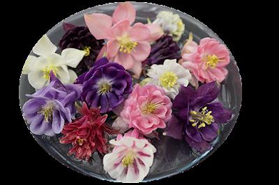flowers, plants,