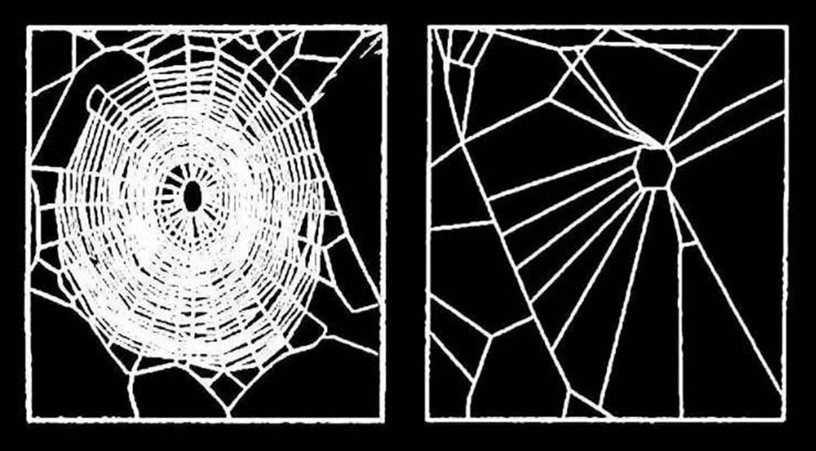 nasa spiders drugs experiment