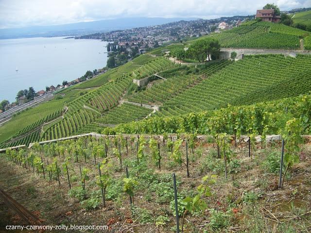 Szwajcaria: winnice w okolicach Lozanny.