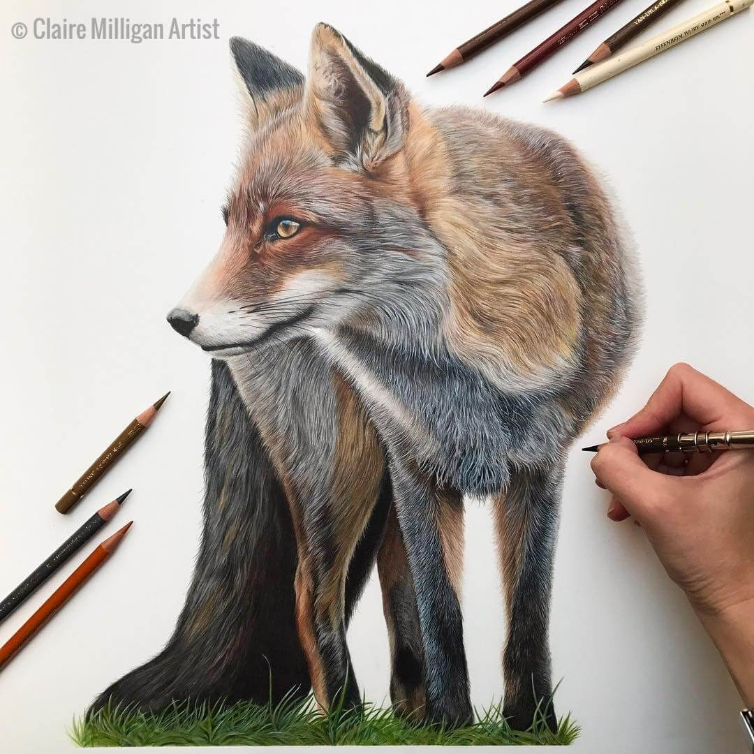 08-Red-Fox-Claire-Milligan-Realistic-Color-Pencil-Animal-Portraits-www-designstack-co