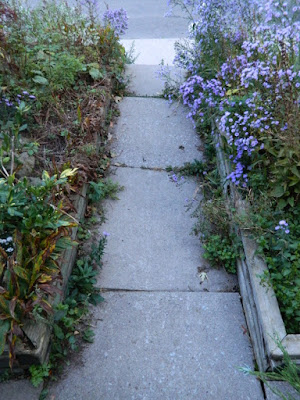 Toronto Roncesvalles Front Yard Fall Cleanup Before by Paul Jung Gardening Services--a Toronto Organic Gardener