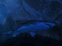 oceanografic valencia