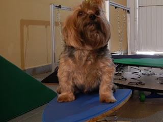 exercício para os cães