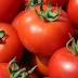 Ντομάτες από Τουρκία με ιό της ηπατίτιδας Α εντοπίσθηκαν στα σύνορα της Ελλάδας