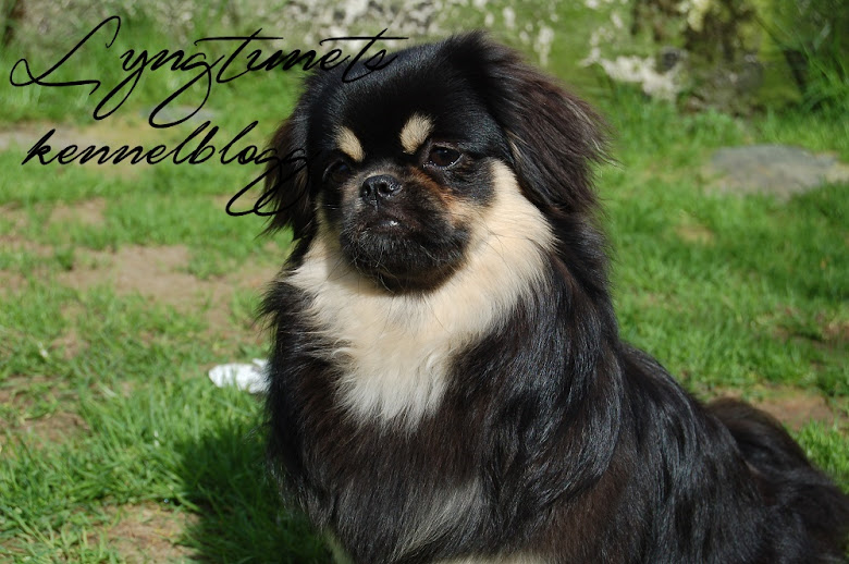 Blogg for Lyngtunet kennel