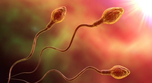 Scientists Successfully Grow Fully Functioning Sperm In Laboratory