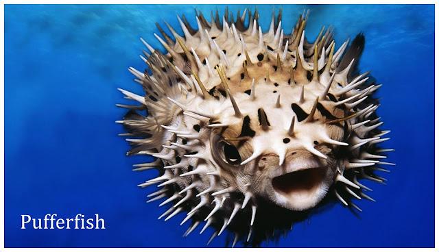 Weird sea creatures | Weird List | Weird Creatures