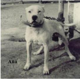 entrainement chien exclusif sanglier