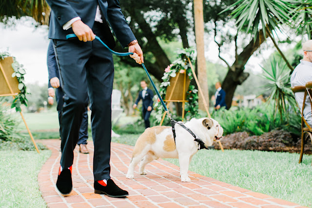 dog in wedding walking down aisle