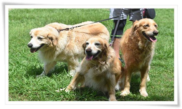 dog training equipment agility