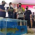 Inilah Modus Pencurian 400 Ikan Arwana Super Red Senilai Rp24 Miliar