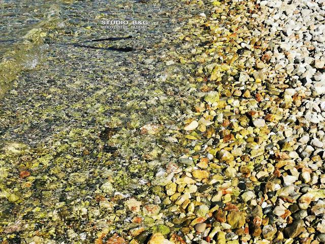 Αργολίδα: Βάφτηκε κίτρινη η παραλία Καραθώνας από τα απόβλητα των χυμοποιείων στον βιολογικό