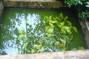 kolam,ikan,mini,pekarangan