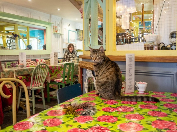 cat cafe stratford upon avon