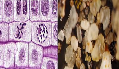 Benda - benda Yang Terlihat Aneh dan Unik Saat di Mikroskop