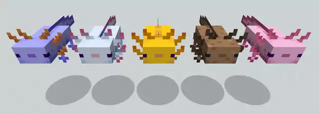 All 5 colors of the axolotl - on the far left is the blue, rarest color.