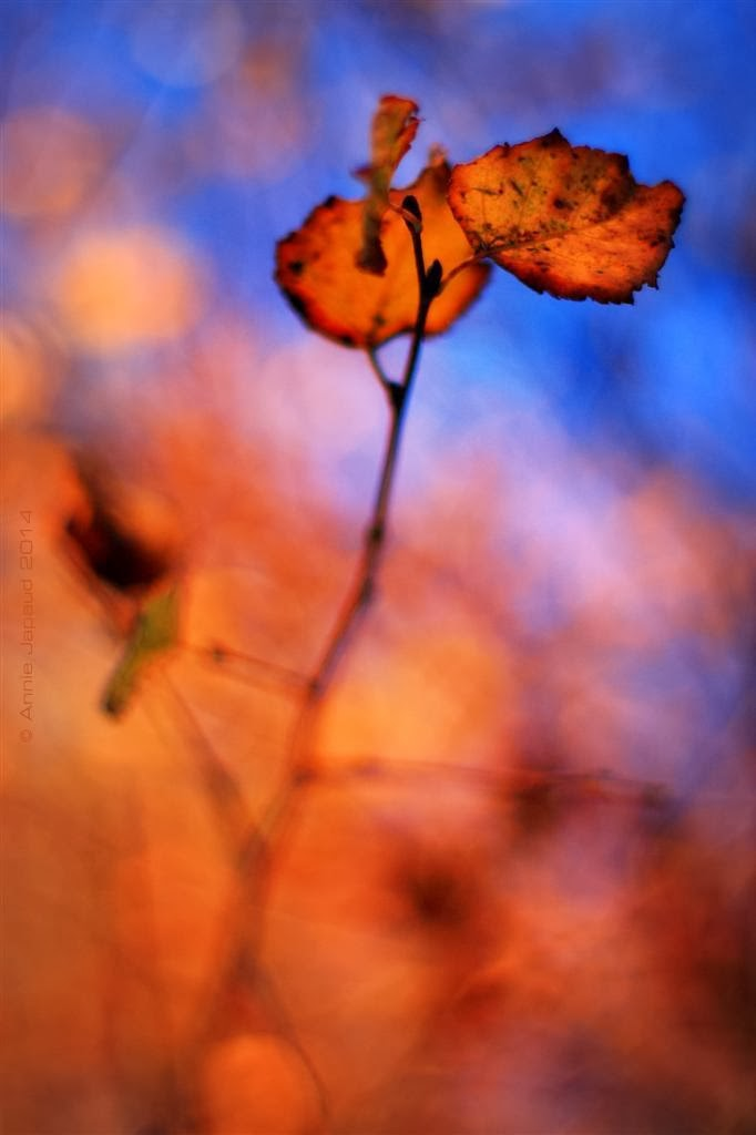a couple of leaves left on a birch branch, golden background