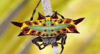 BIZARRE SPIDER