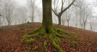 أشجار عادية غابات ضبابية بلاد