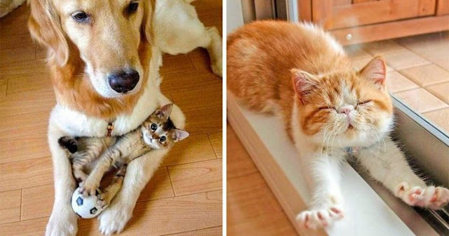 25 Photos That Prove Cats Are Literally The Cutest Things On Earth
