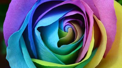 اجمل ورد في العالم,صور اجمل ورد,اجمل الورود في العالم,صور عن الورد,صور ورد جميله