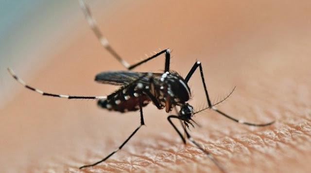 Mengantisipasi Virus Zika Yang Disebarkan Oleh Nyamuk Aedes Aegypti