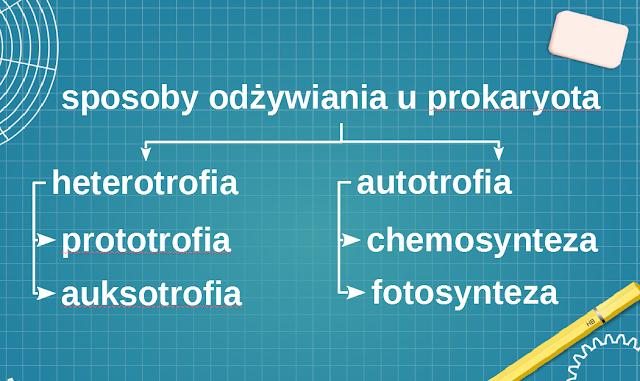 prototrofia, auksotrofia