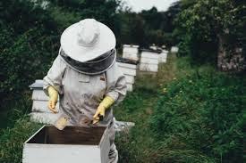 Η επιθεώρηση της κυψέλης με απλά βήματα για τους Αρχάριους μελισσοκόμους
