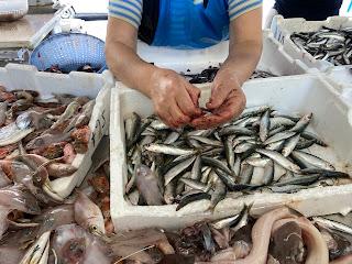 La Spezia - fishmonger shows how to clean anchovies