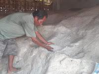 Petani Garam Kelimpungan Akibat Pemerintah Impor Garam