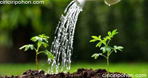 ciri ciri pohon penyiraman