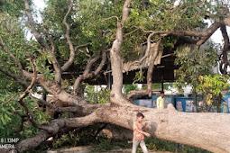 तेज आंधी बारिश के चलते गिरी स्कूल की चहारदीवारी, आम का पेड़ गिरने से दुकाने नष्ट