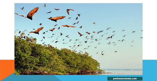 destinasi wisata pulau hewan yang ada di indonesia