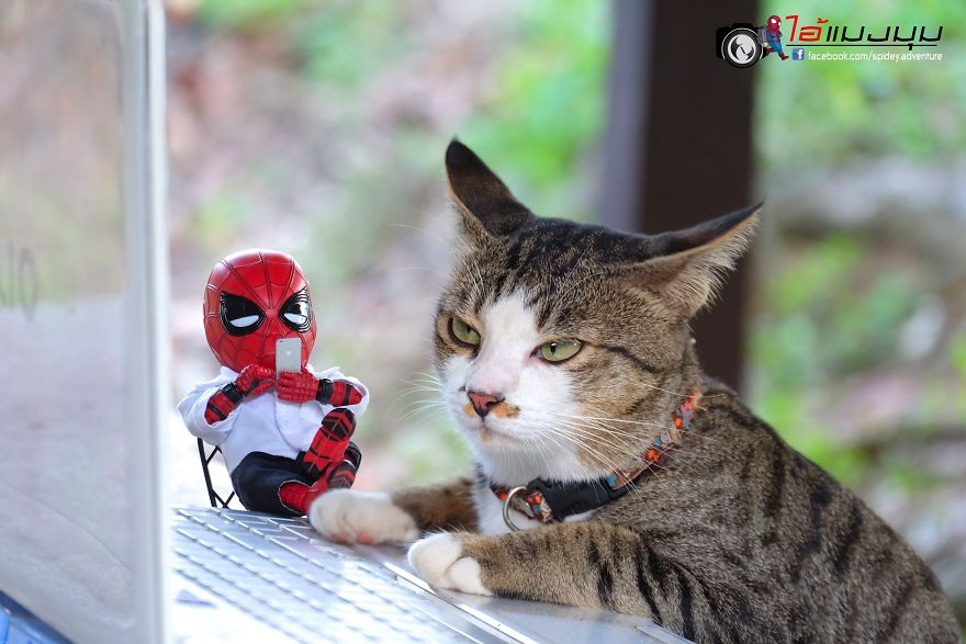 30 Pictures Of Baby Spiderman And Cats In The Funniest Scenarios