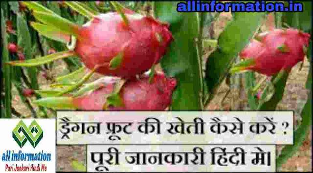 ड्रैगन फ्रूट की खेती कैसे करे पुरी जानकारी । Dragon fruit ki kheti kaise kare Full Information In Hindi